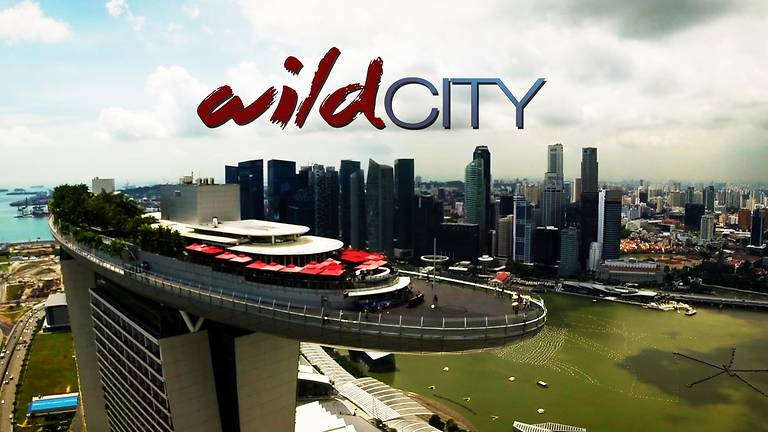 Wild City on Toggle TV