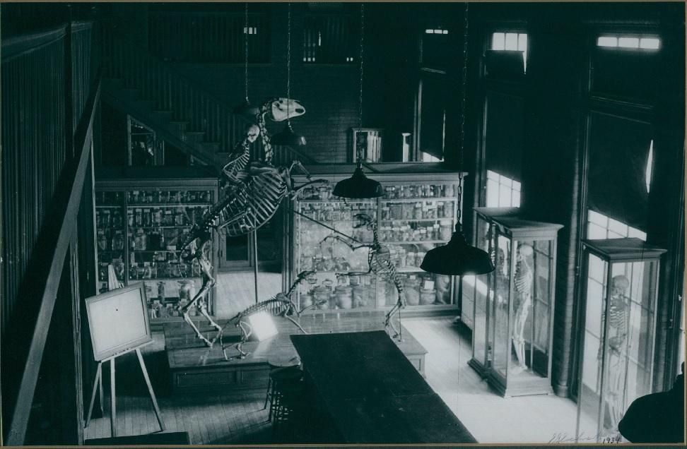 Pathology Museum photo