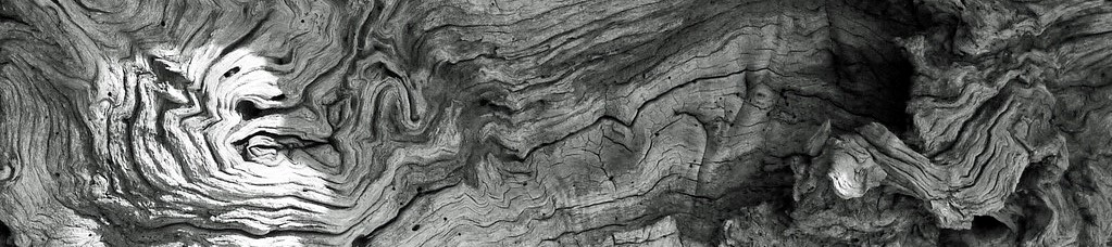 Tree rings Photo title: