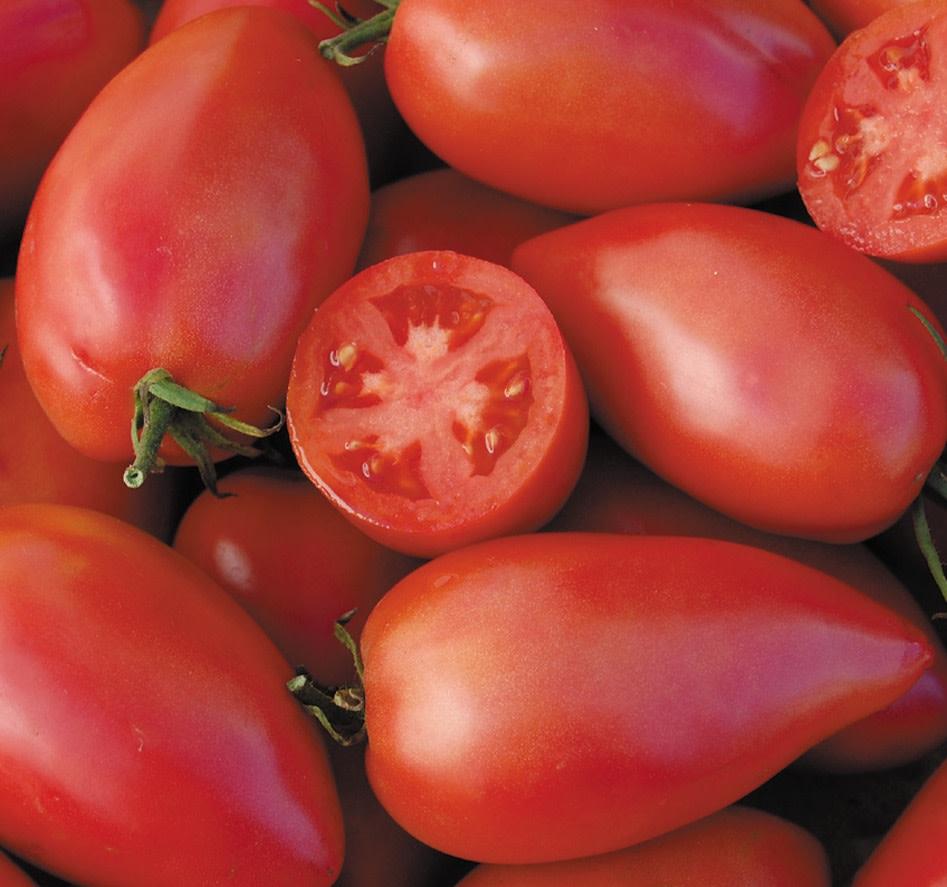 Sheboygan Paste Tomatos