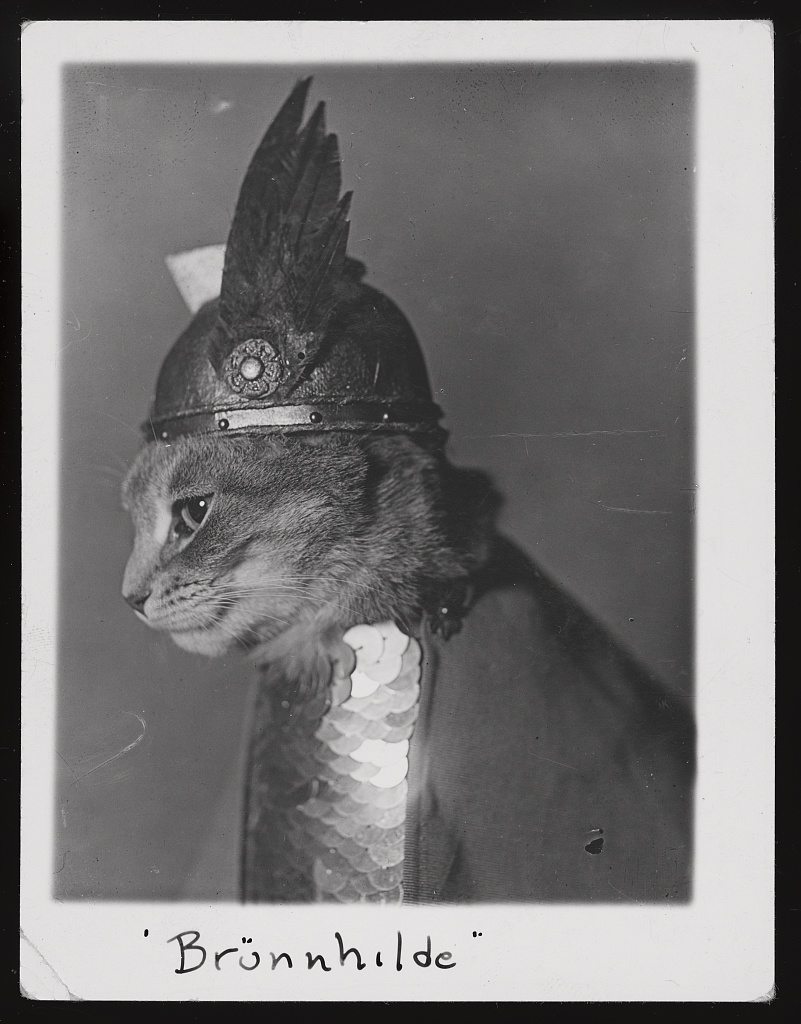 "cat dressed as viking, captioned with ""Brunnhilde"""