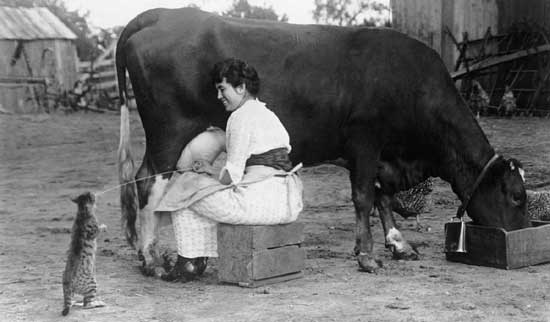 Woman milking a cow, sharing with cat.