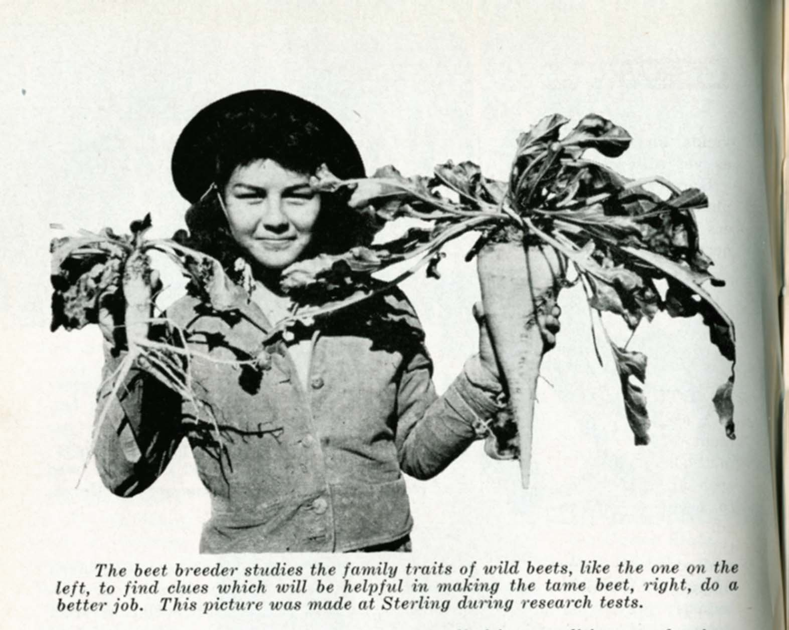 Young woman holding wild beet and