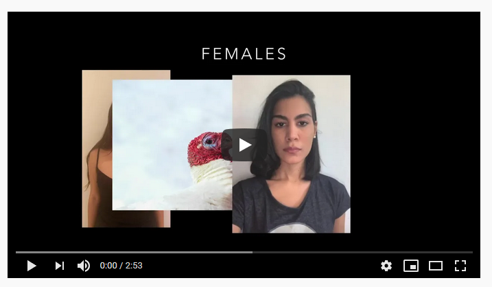 Video about gender in humans and non-human species