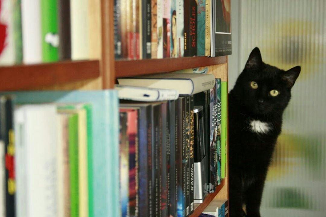 cat peeking around a bookshelf