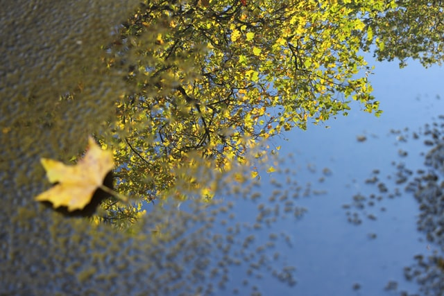 Leaf on pavement by a reflection of tree in water