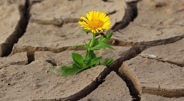 Flower growing out of dry, cracked soil