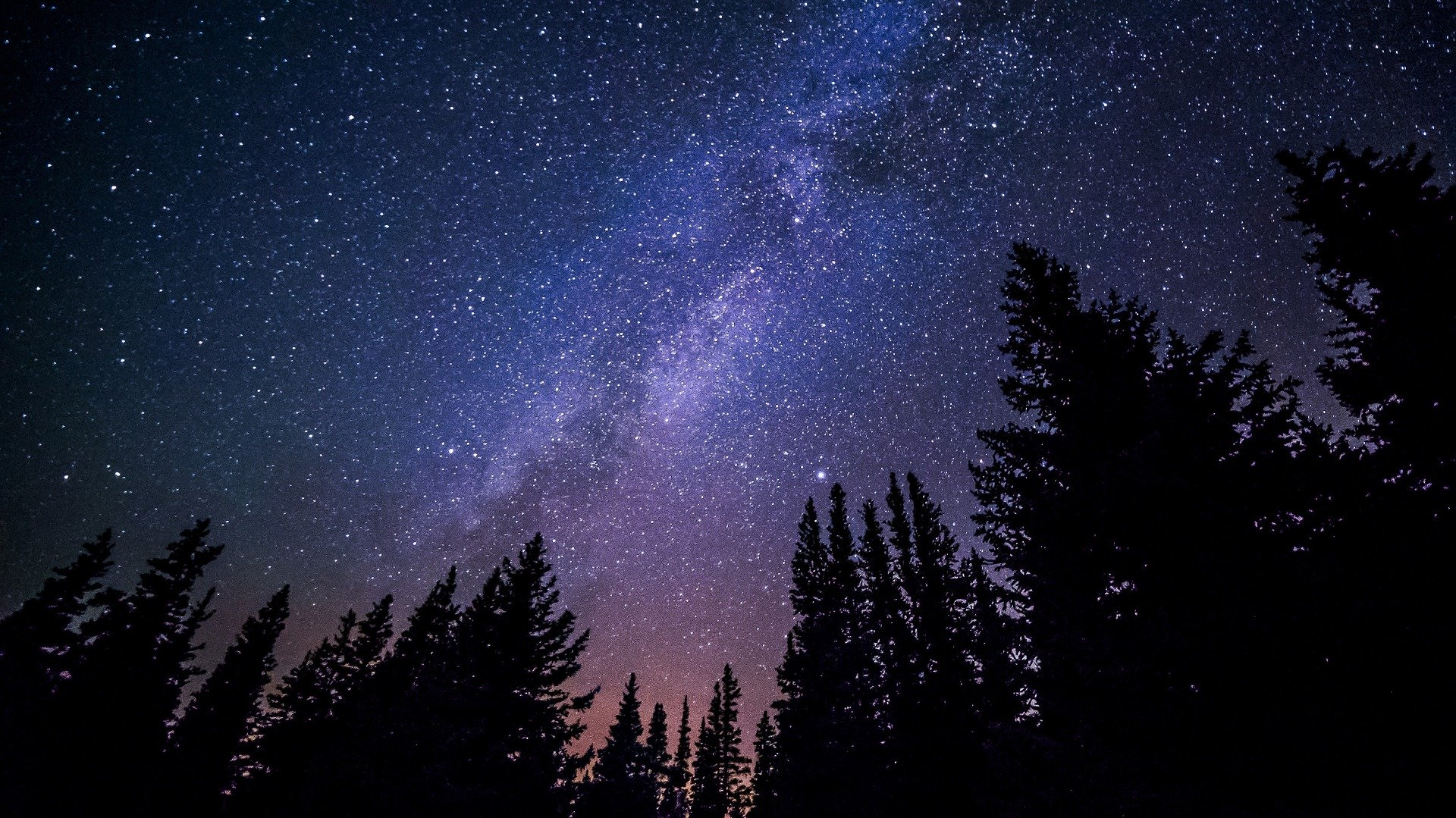 A star-filled nighttime photo of a dark blue sky that fades to pink near the horizon of pine trees