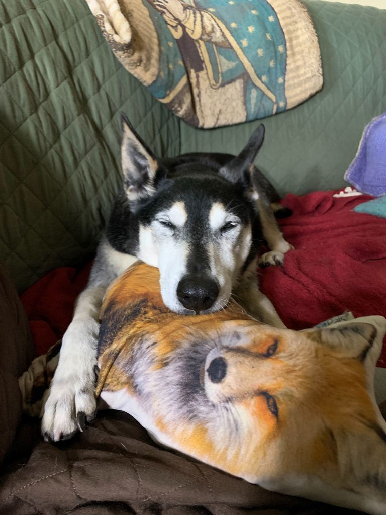 Black and white dog laying on top of a dog print pillow with arm outstretched