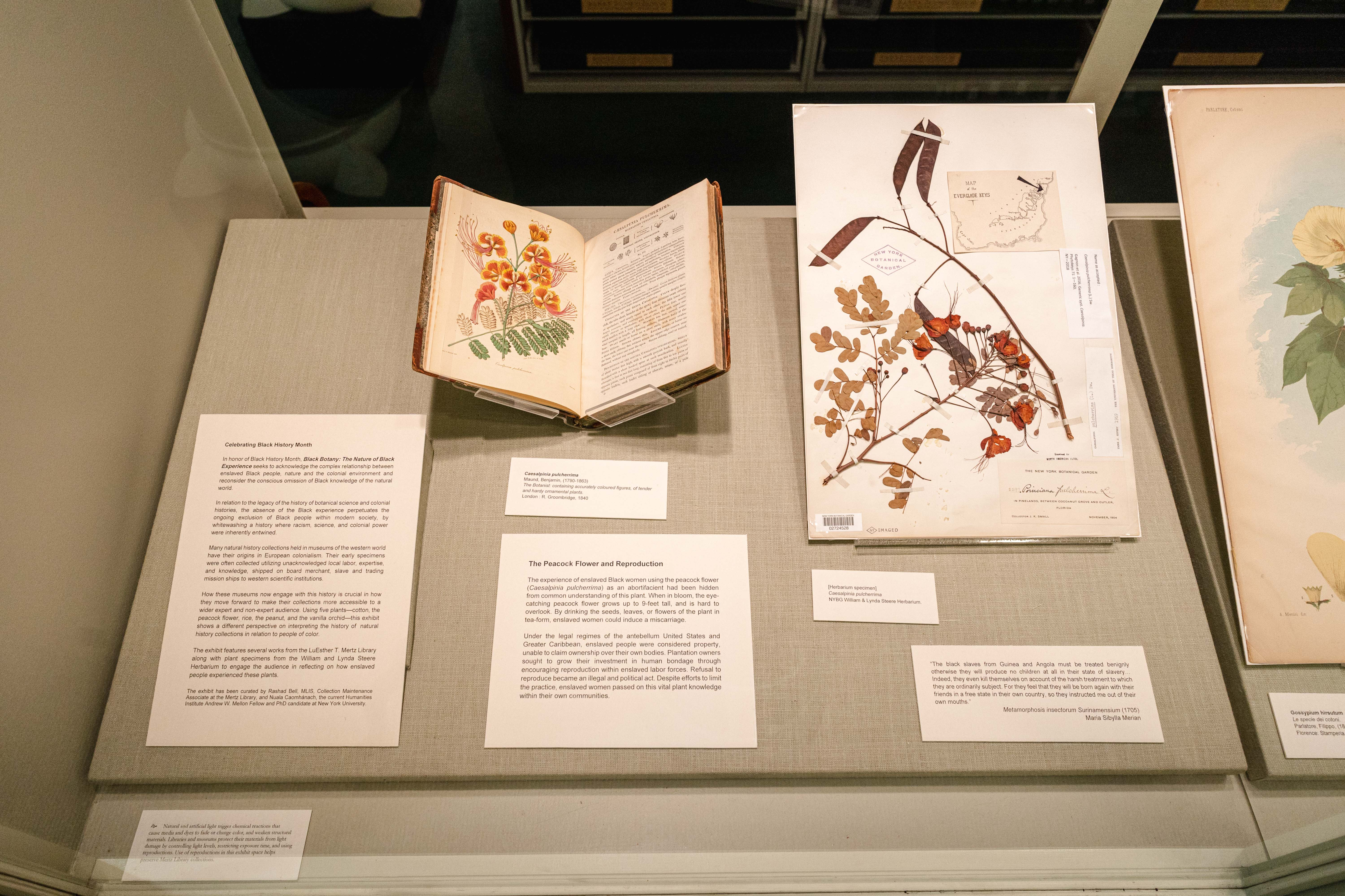 Rare Book Room: The Peacock Flower and Reproduction