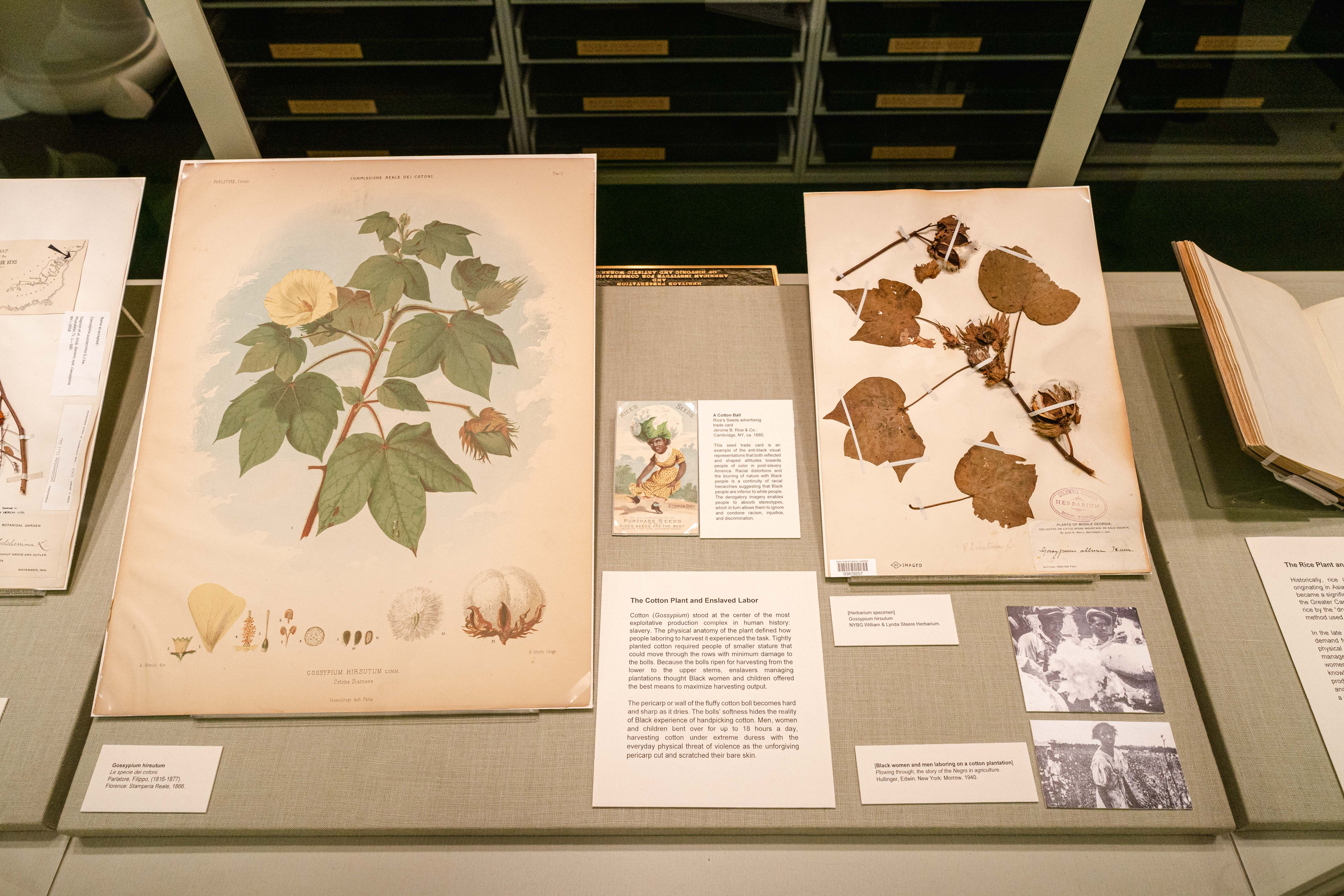 Rare Book Room: The Cotton Plant and Enslaved Labor