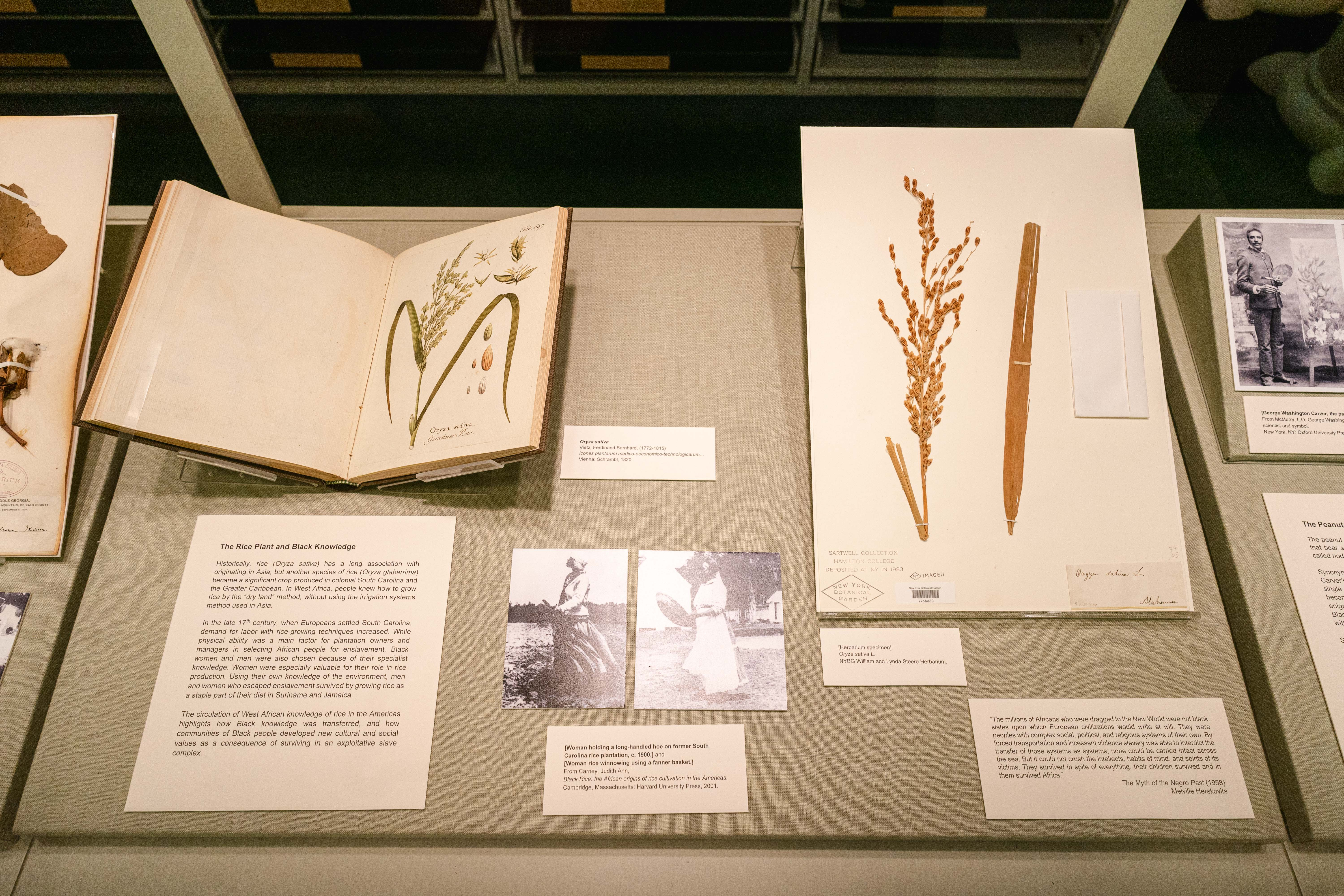 Rare Book Room: The Rice Plant and Black Knowledge