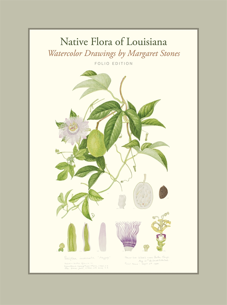 cover of Native Flora of Louisiana