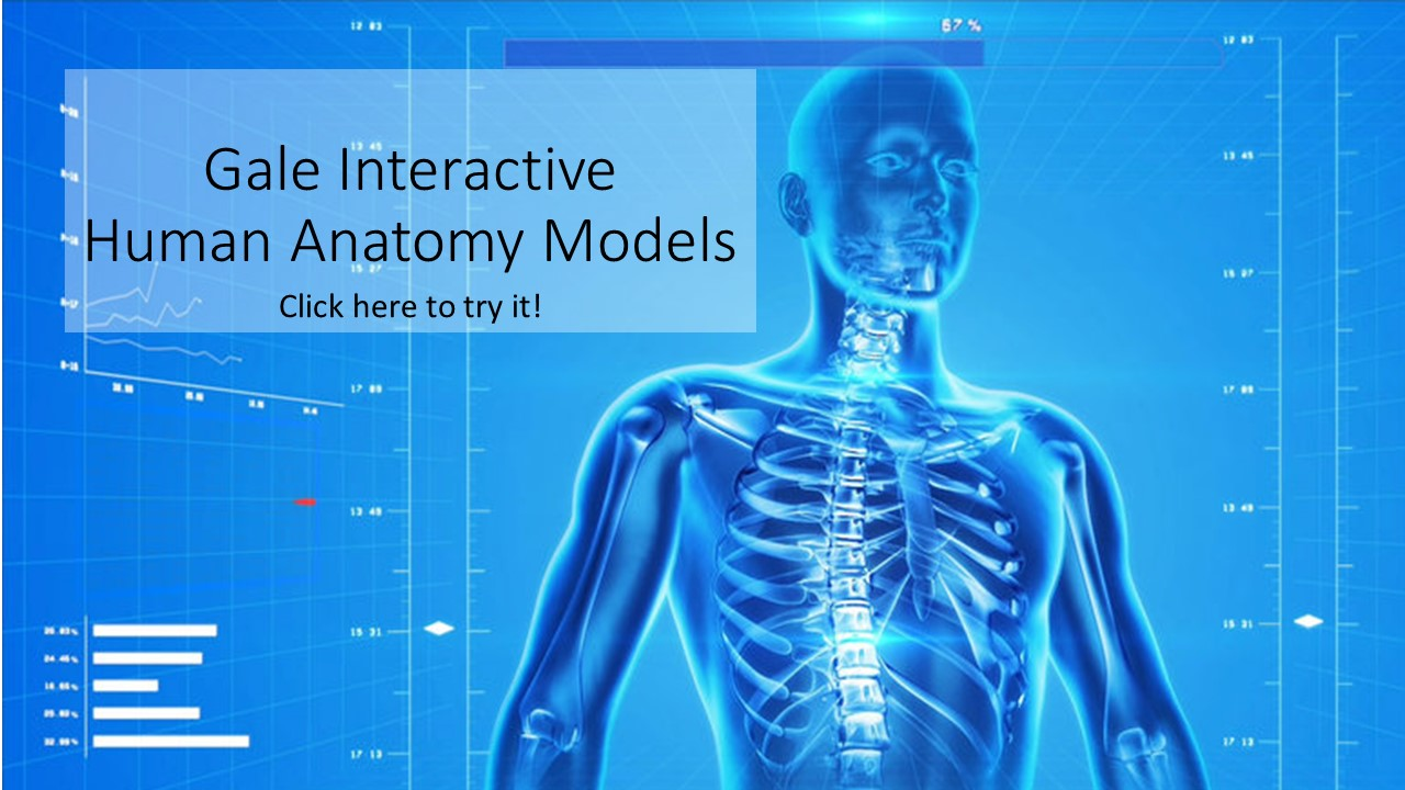 gale interactive human anatomy slide