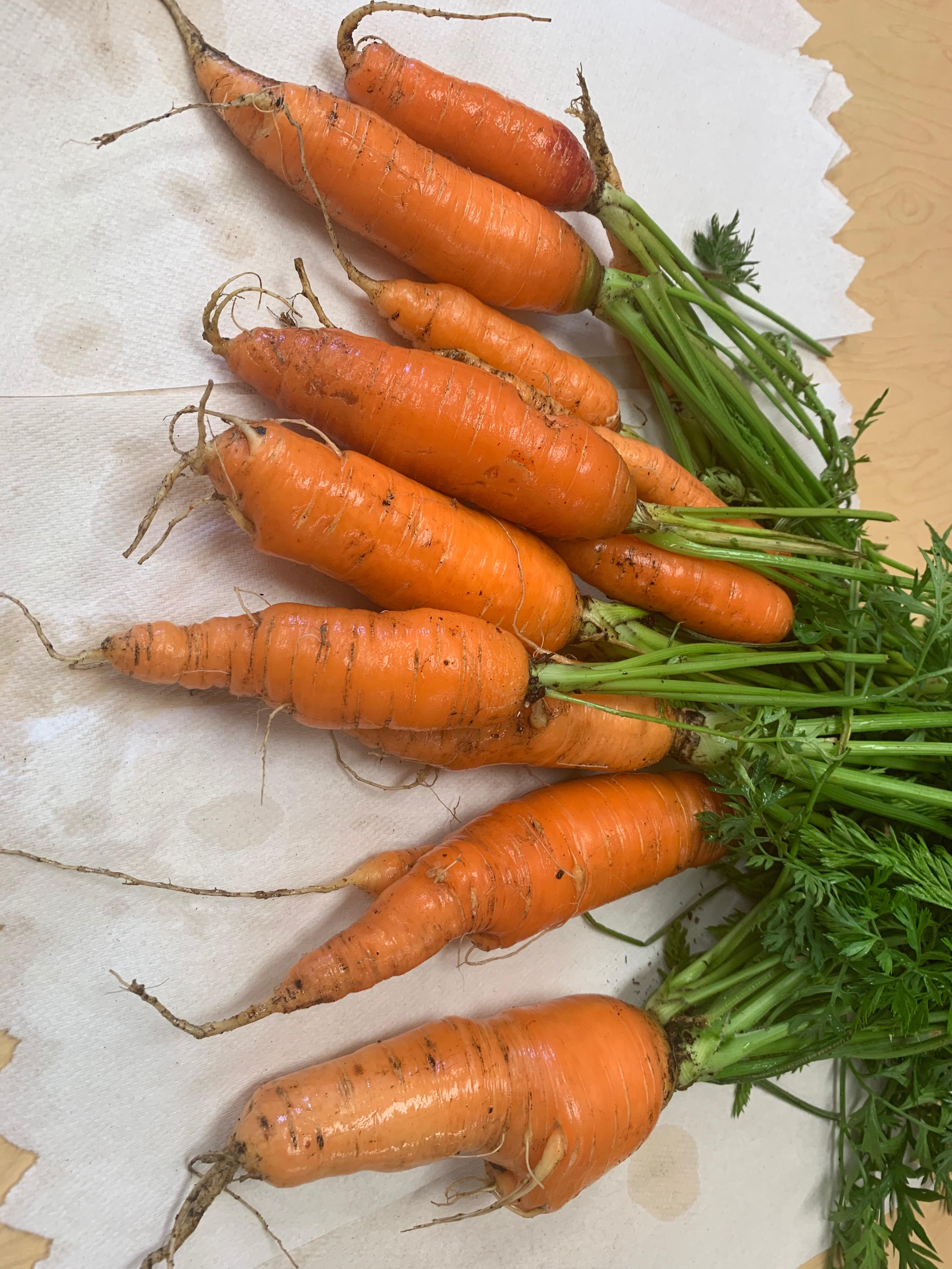 carrots for food pantry