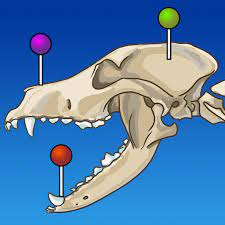 dog skull graphic with pins