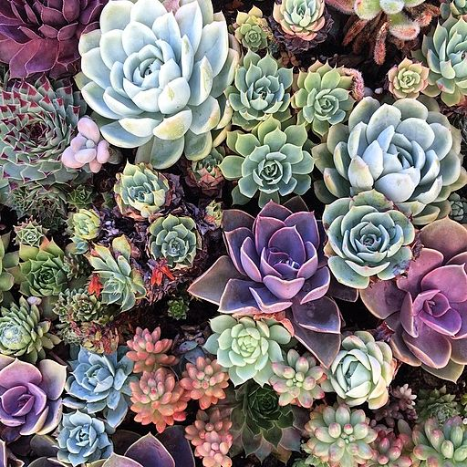 Incredible Succulents Pt. 2