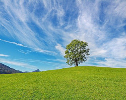 tree on hill with sky