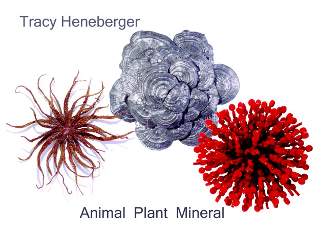 Animal Plant Mineral