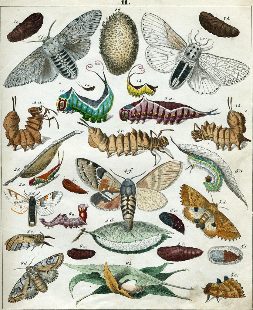 Berge's Schmetterlinge, plate 11: Drawings/paintings of various invertebrates.