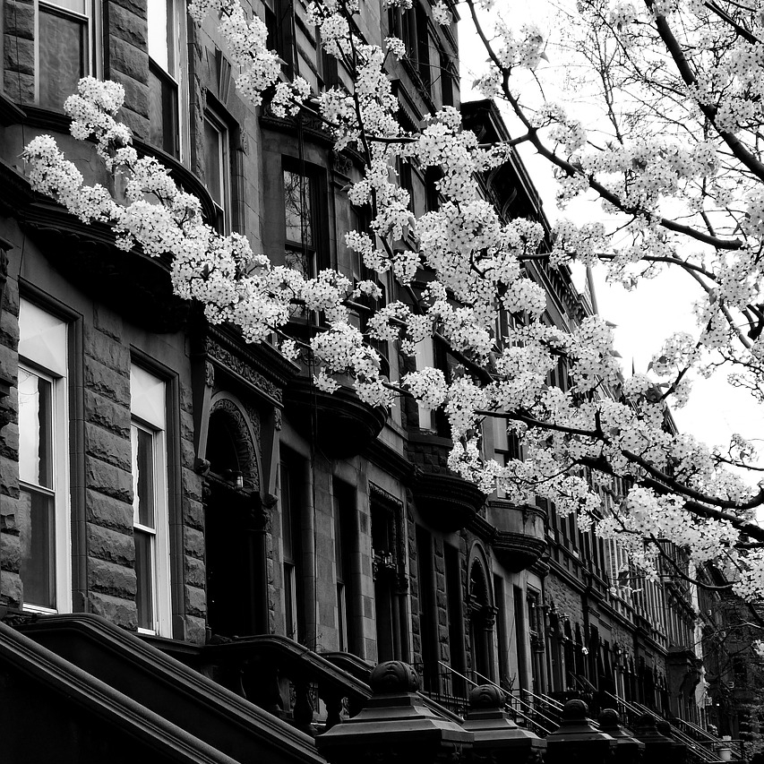 Black & white photograph of a Harlem street in spring