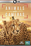 Animals with Cameras