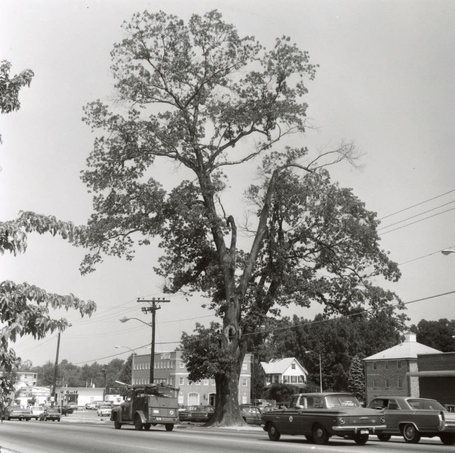 CANCELLED: Forgotten Fairfax: Histree - Notable Trees in Fairfax County's History