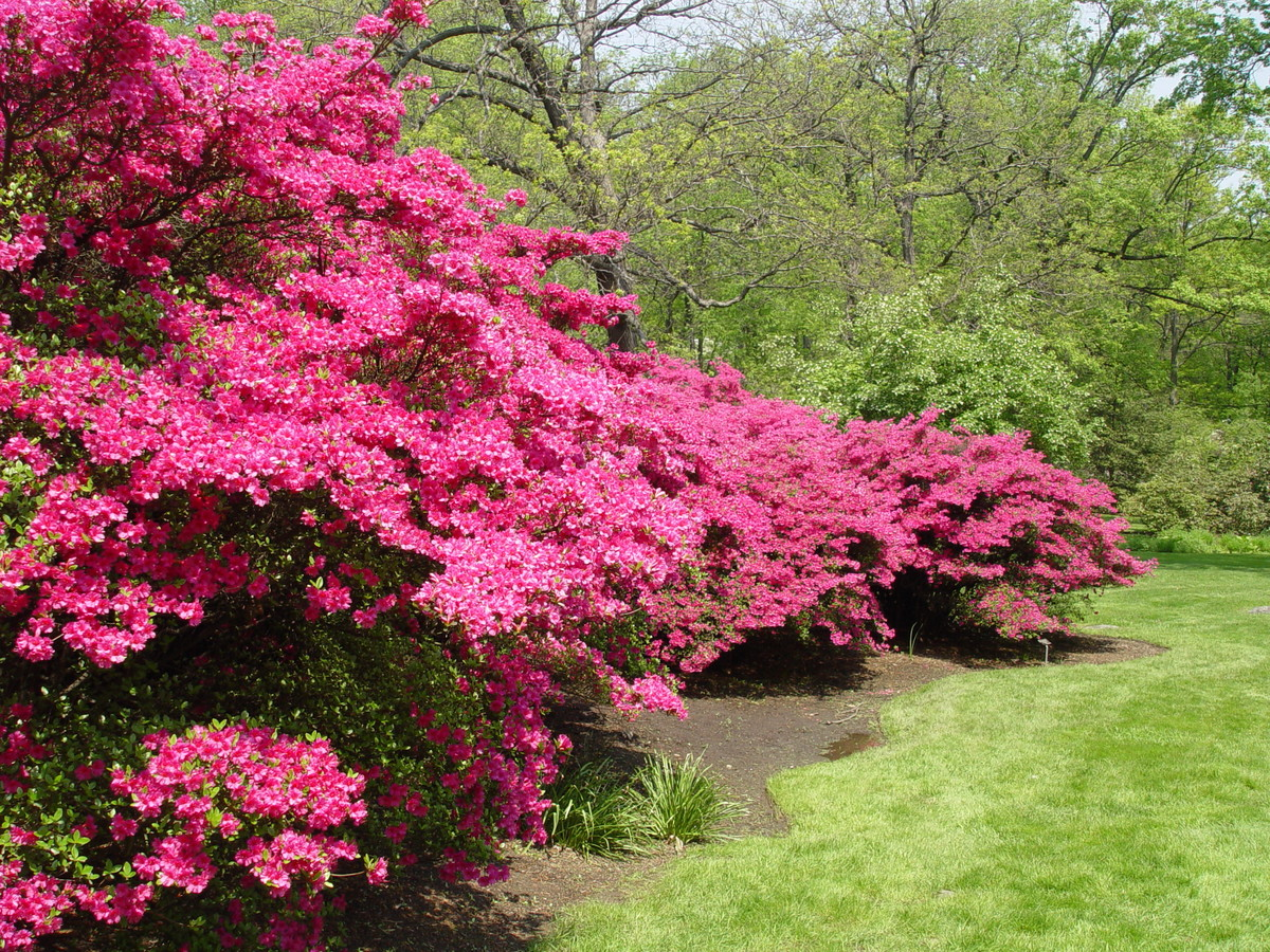 A pH below 5.5 is best for growing acid-loving plants like azaleas and rhododendrons