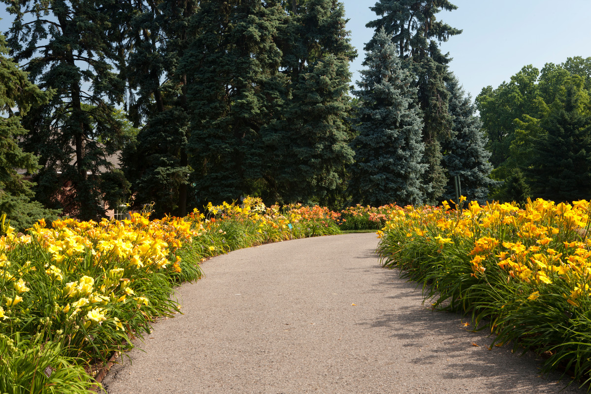 Day Lily Way in full bloom at NYBG; photo by Ivo Vermeulen