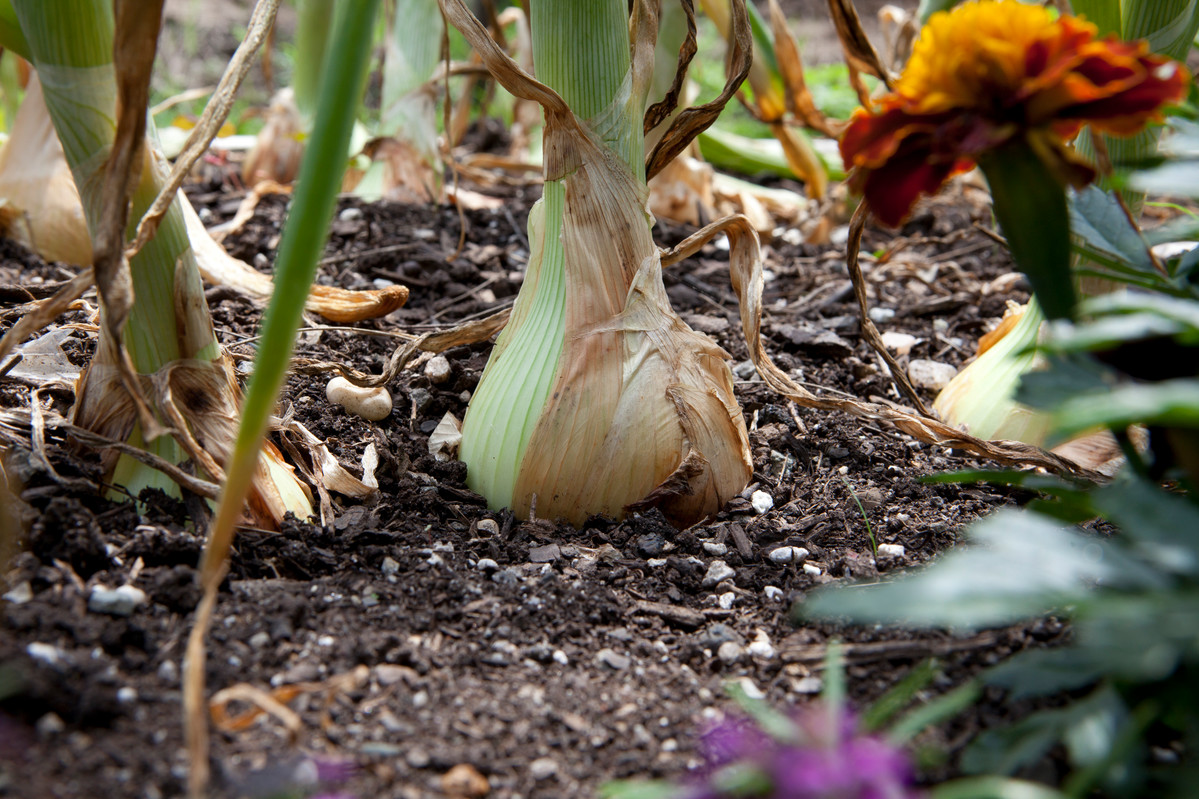 When Planting a Vegetable Garden, Remember to Rotate Your Crops; photo by Mark Pfeffer