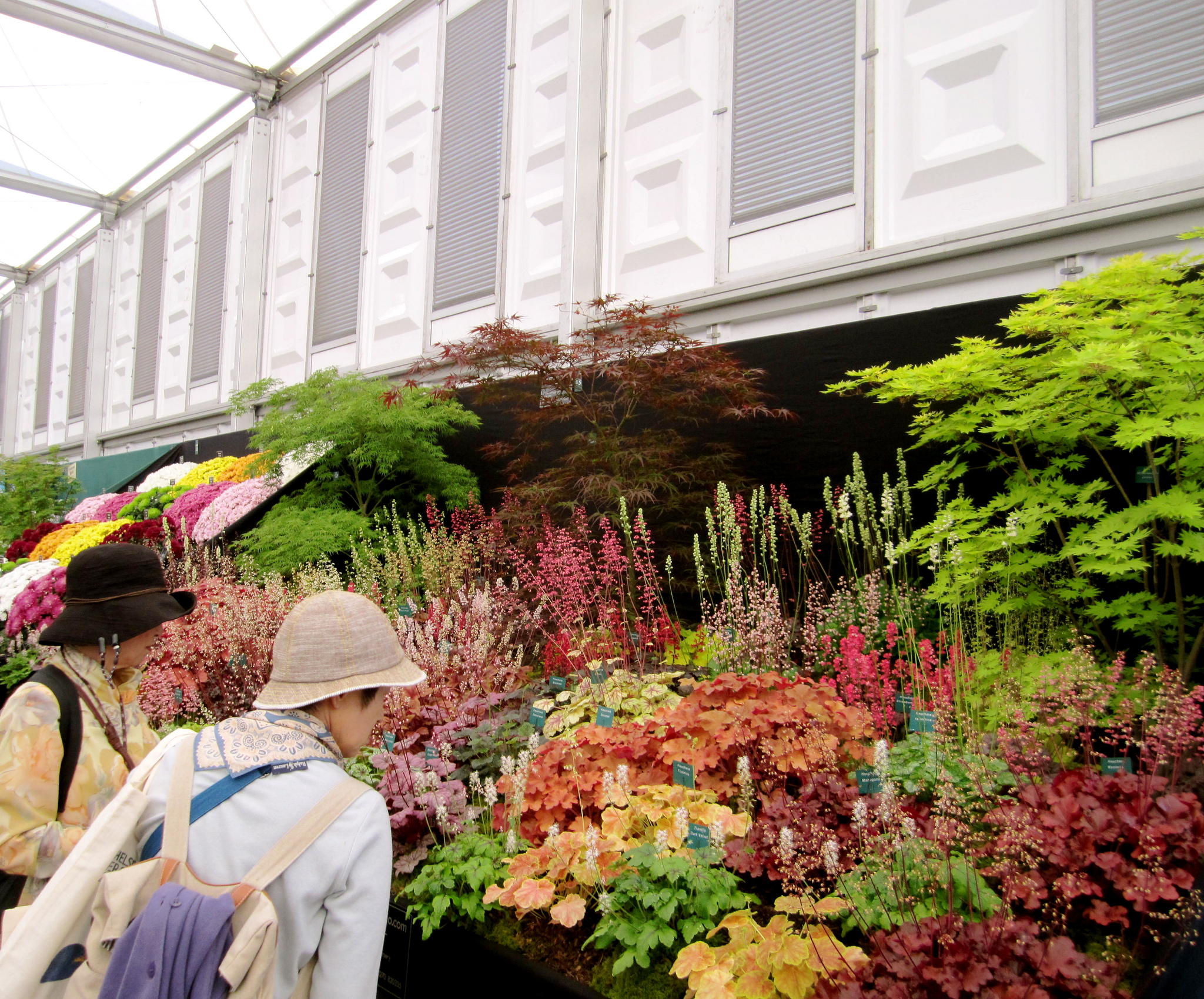 A swath of Heuchera cultivars on display; photo courtesy of Flickr cc/La Citta Vita