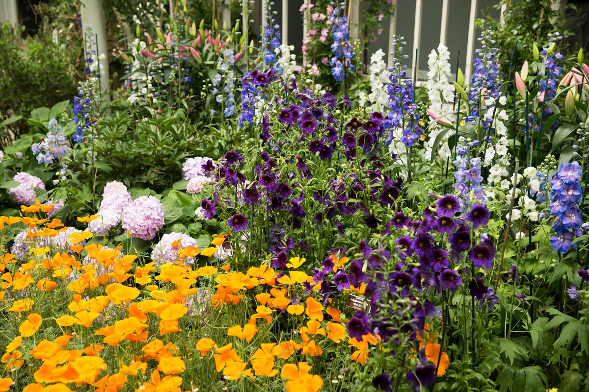 photo of border featuring delphinium and hollyhock in American Impressionist Exhibit
