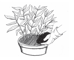 Illustration of compost being added to a potted plant container