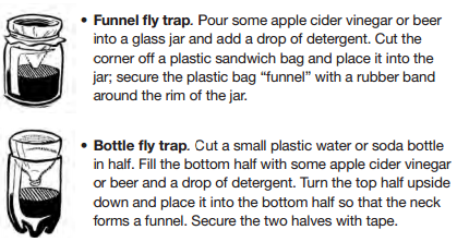 Images of funnel fly trap and bottle fly trap