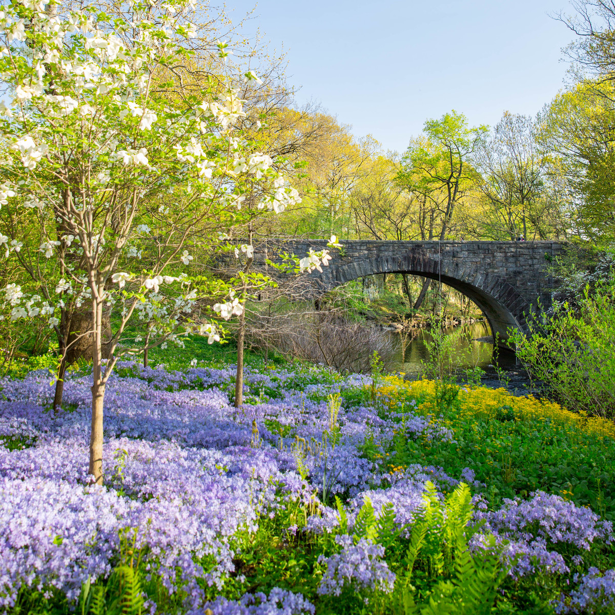 A spring display at NYBG's Stone Mill; photo by Marlon Co