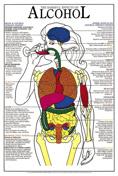 A white poster with black text and a colorful diagram of the internal anatomy of the human body, labelled with the harmful effects of alcohol