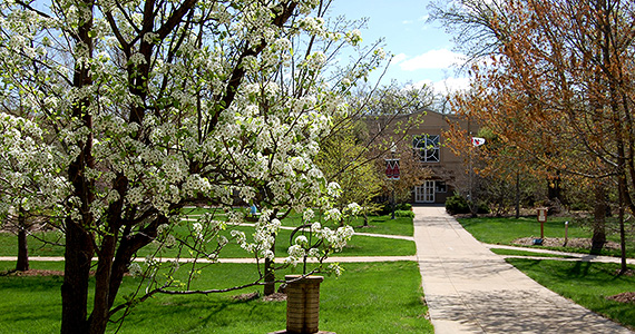 Courtyard with blossoming trees in front of the library