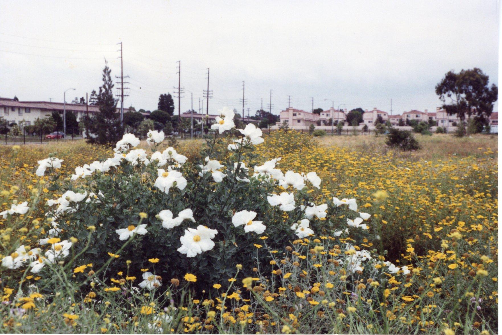 wildflowers in field
