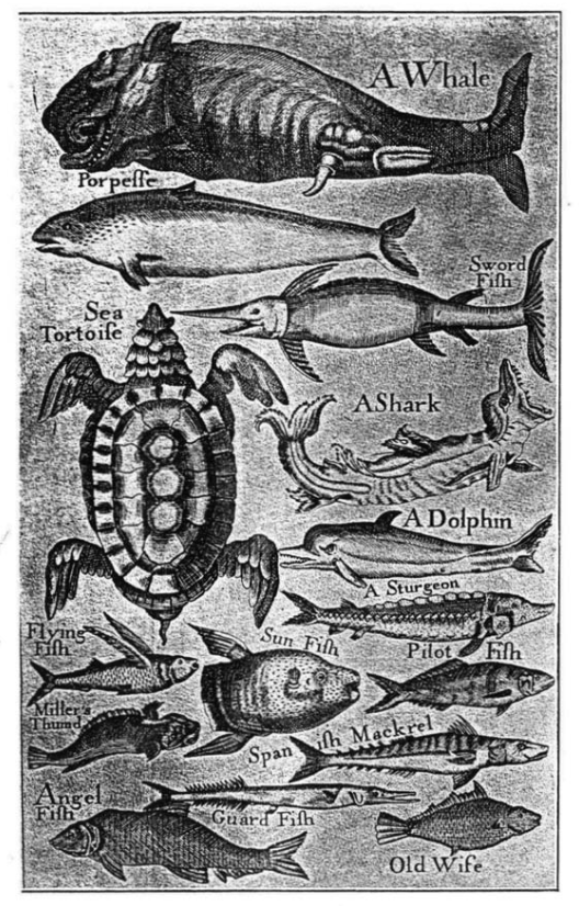 Image of Sea Creatures