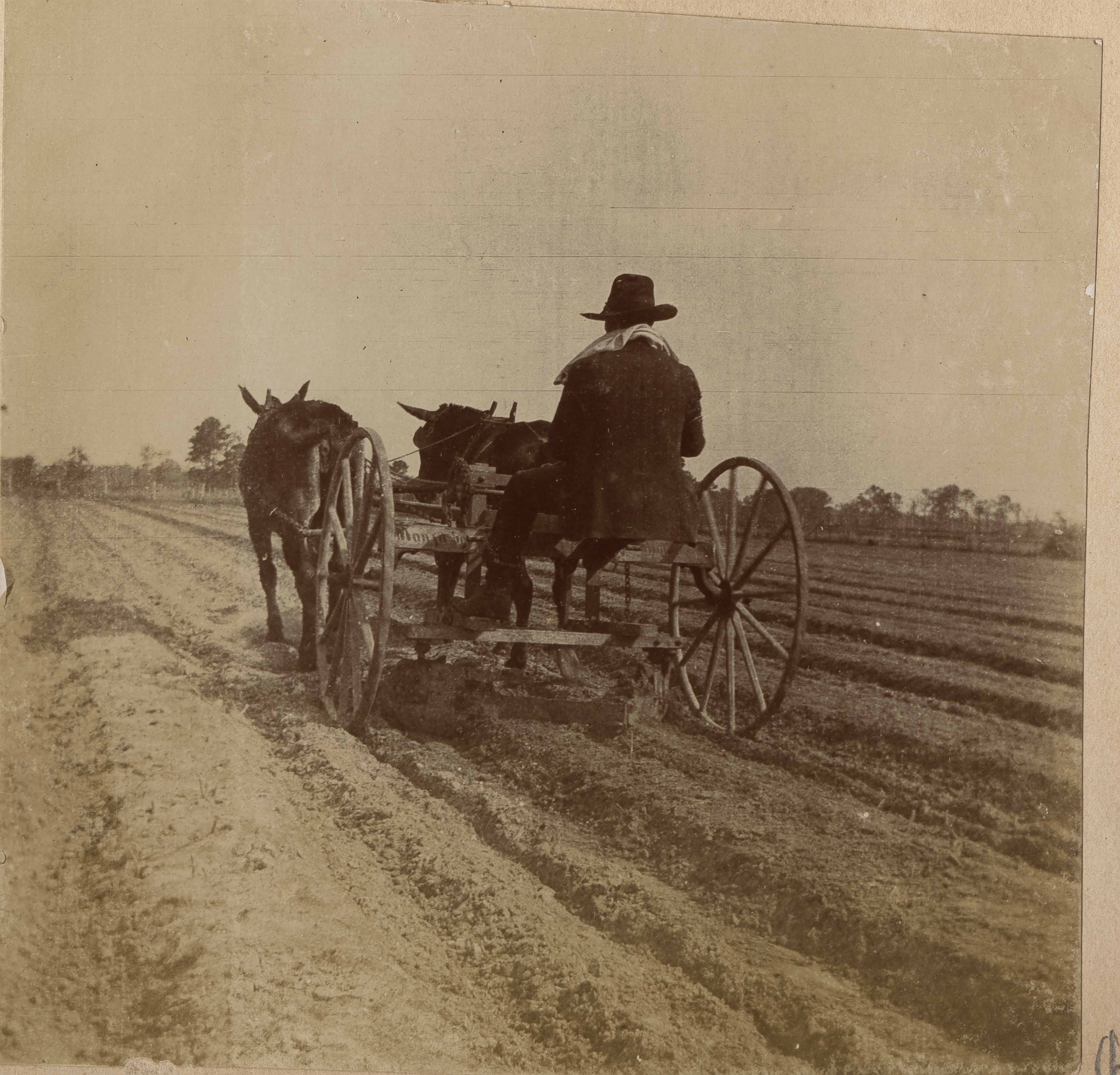 Photograph of a man sowing a field in a horse-drawn plow.