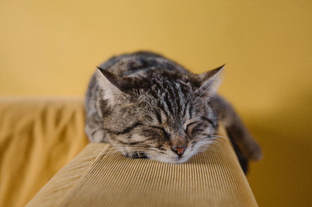photo of a cat sleeping