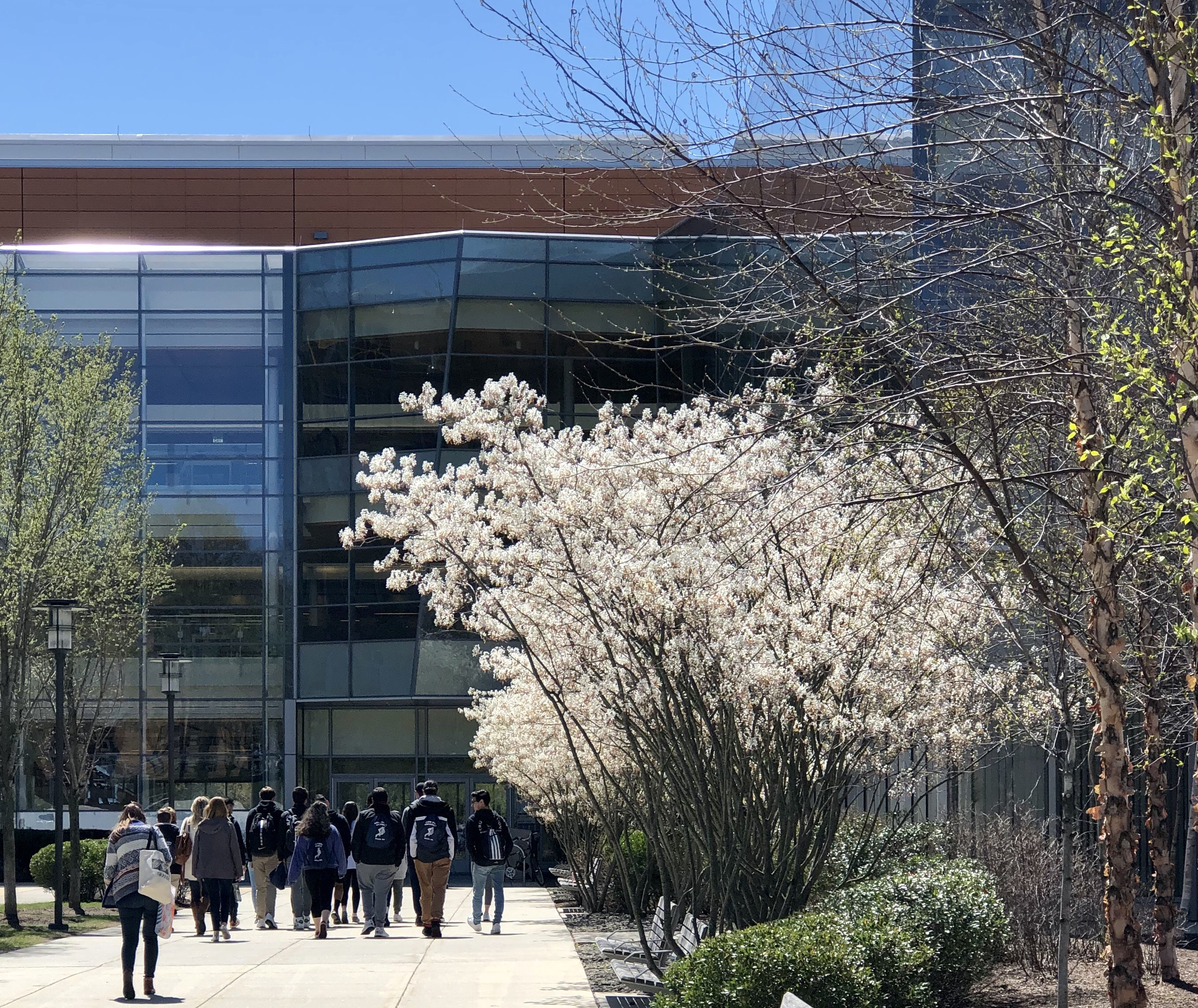 Spring flowers and students at library entrance