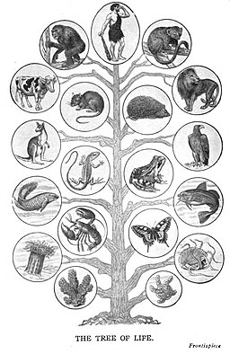 Illustration of the Tree of Life showing the rough