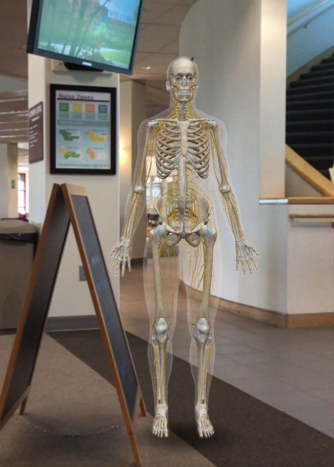 Augmented reality skeleton standing near the stairwell in Foley Library