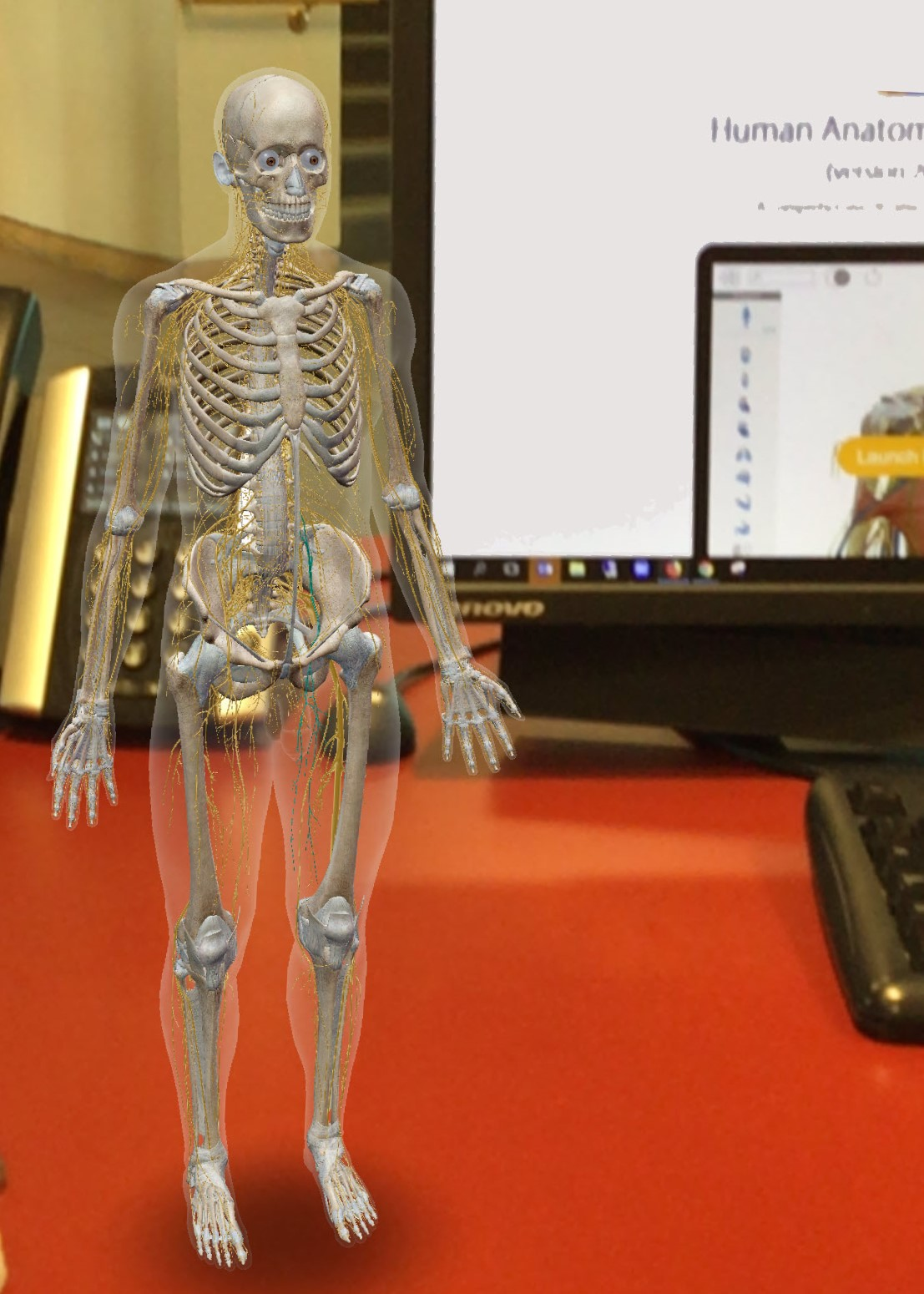 Visible Body augmented reality skeleton standing on a computer desk.