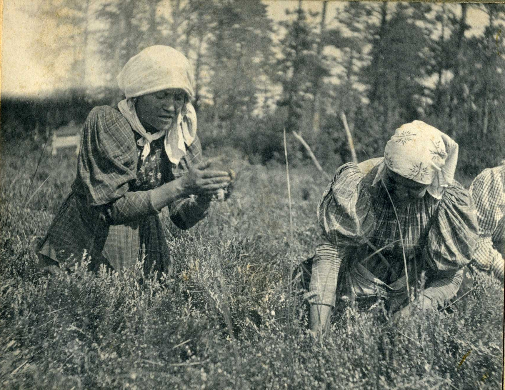 Two workers in bonnets bending over in field.