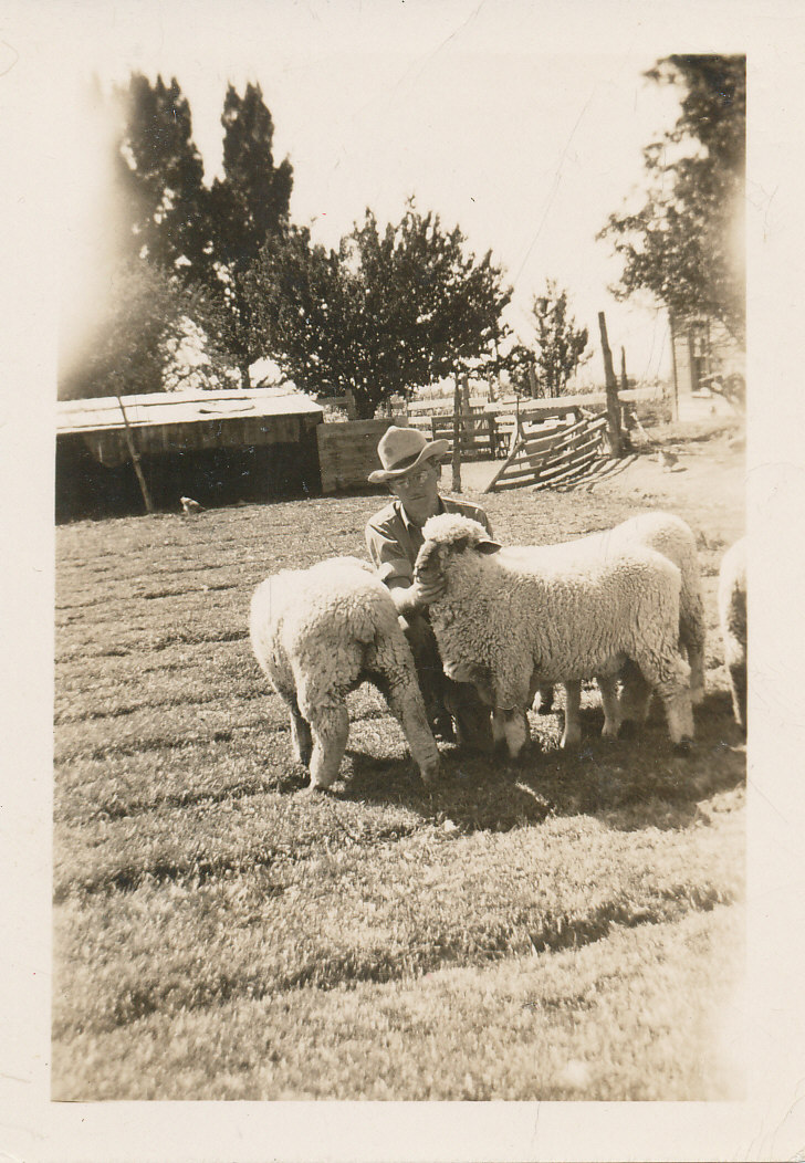 man in cowboy hat with two sheep