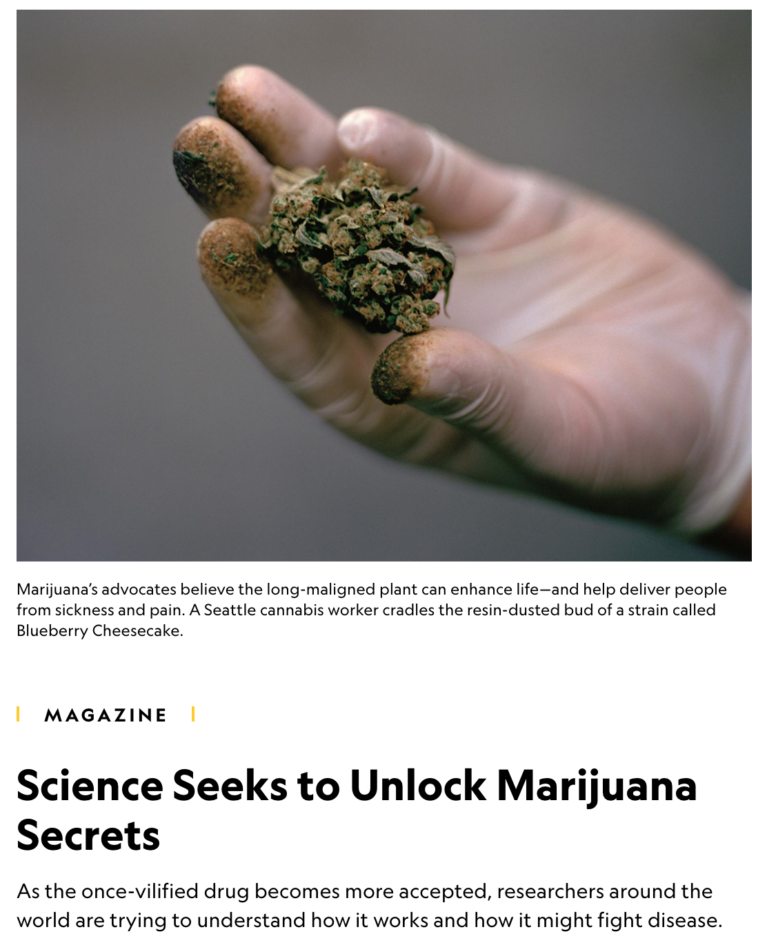 Science seeks to unlock marijuana secrets