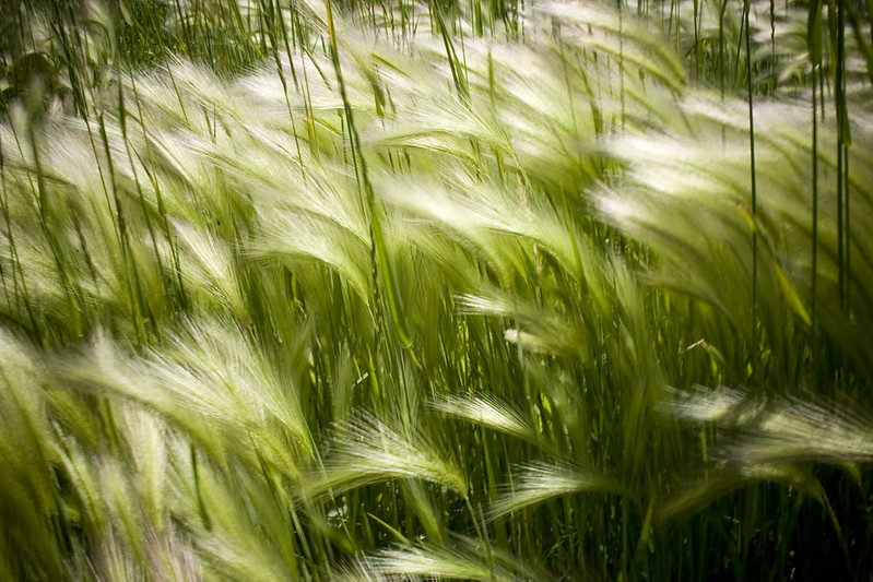 Biology (Grasses) by Kate Brady from Flickr