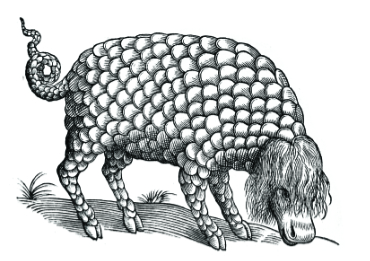 Black and white coloring page of a scaly creature